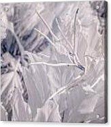Florida Whites Acrylic Print
