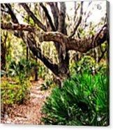 Florida Woods Acrylic Print
