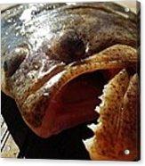 Flounder Face 2 10/26 Acrylic Print