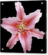 Flower 002 Acrylic Print