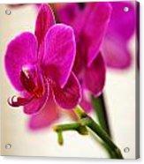 Flower 012 Acrylic Print