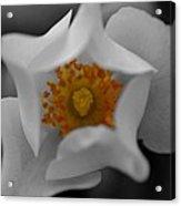 Flower 02 Acrylic Print