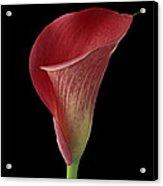 Flower 102 Acrylic Print