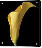 Flower 103 Acrylic Print