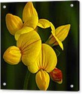Flower 105 Acrylic Print