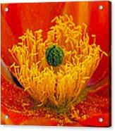 Flower 108 Acrylic Print