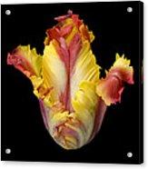 Flower 112 Acrylic Print