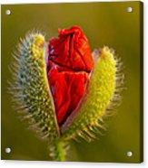 Flower 124 Acrylic Print