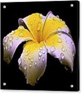 Flower 171 Acrylic Print