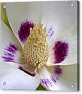 Flower 179 Acrylic Print