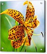 Flower 183 Acrylic Print