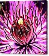 Flower 22 Acrylic Print