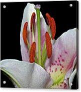 Flower 234 Acrylic Print