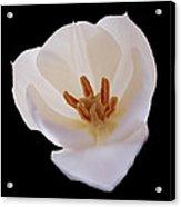 Flower 270 Acrylic Print