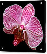 Flower 280 Acrylic Print