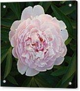 Flower 3 Acrylic Print