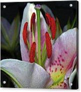 Flower  97 Acrylic Print