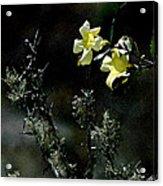 Flower Among The Moss Acrylic Print