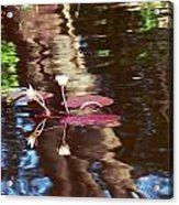 Flower And Lily Pad Acrylic Print
