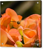 Flower And Ready To Fly Acrylic Print