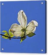 Flower And Sky Acrylic Print