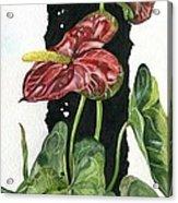 Flower Anthurium 01 Elena Yakubovich Acrylic Print by Elena Yakubovich