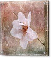 Flower Art - Nature Reminds Us Acrylic Print