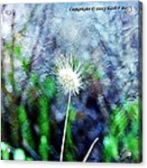Flower As A  Painting Acrylic Print