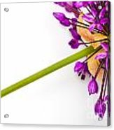 Flower At Rest Acrylic Print
