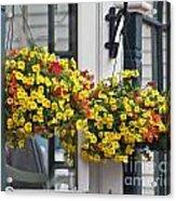Flower Baskets  Acrylic Print