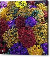 Flower Bed Across The Street From The Grand Palais Off Of Champs Elysees  Acrylic Print