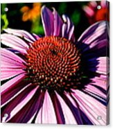 Flower Bed Close Up Acrylic Print