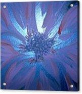Flower Blue Acrylic Print