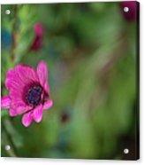 Flower Bokeh  Acrylic Print