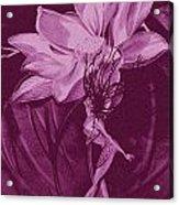 Flower Bomb One Reticulation Acrylic Print