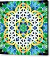 Flower Bubbles Acrylic Print