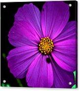 Flower Bug- Viator's Agonism Acrylic Print