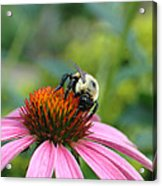 Flower Bumble Bee Acrylic Print