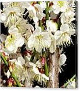 Flower Bunch Bush White Cream Strands Sensual Exotic Valentine's Day Gifts Acrylic Print