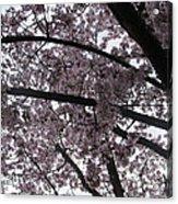 Flower Canopy And Sky Acrylic Print