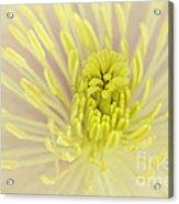 Flower Centre Acrylic Print
