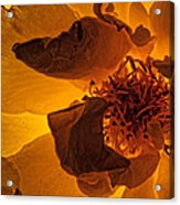 Flower Close Up IIi Acrylic Print