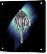 Flower Coneflower Acrylic Print