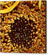 Flower - Daisy - In Other Worlds Acrylic Print