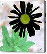 Flower - Daisy - Photopower 327 Acrylic Print