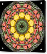 Flower Drum Acrylic Print