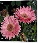Flower Duvet Cover Acrylic Print