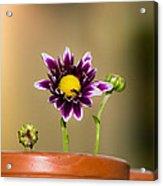 Flower Family Acrylic Print