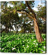 Flower Field - South Western Australia Acrylic Print