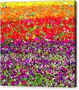 Flower Fields Acrylic Print